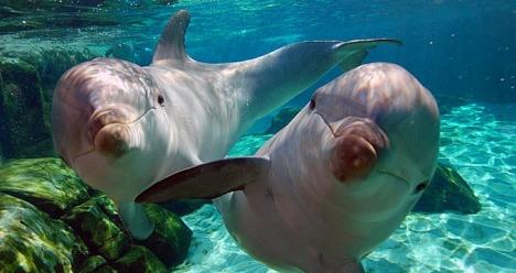 Поплавать с дельфинами