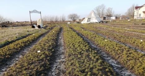 Начать полноценную работу Башкирского кедрового питомника