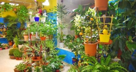 собственный магазин цветов и подарков